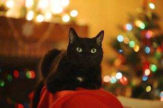 【4日間連続】PCMAXなら初メール送信無料でクリスマスに間に合う!